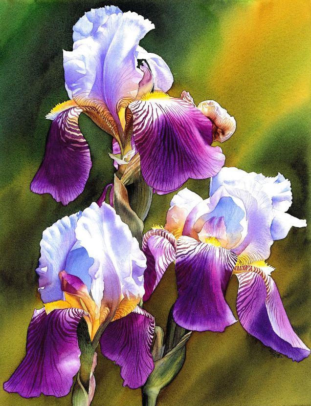 #WorldWatercolorGroup - Watercolor by Krzysztof Kowalski - Sunny Iris - #doodlewash