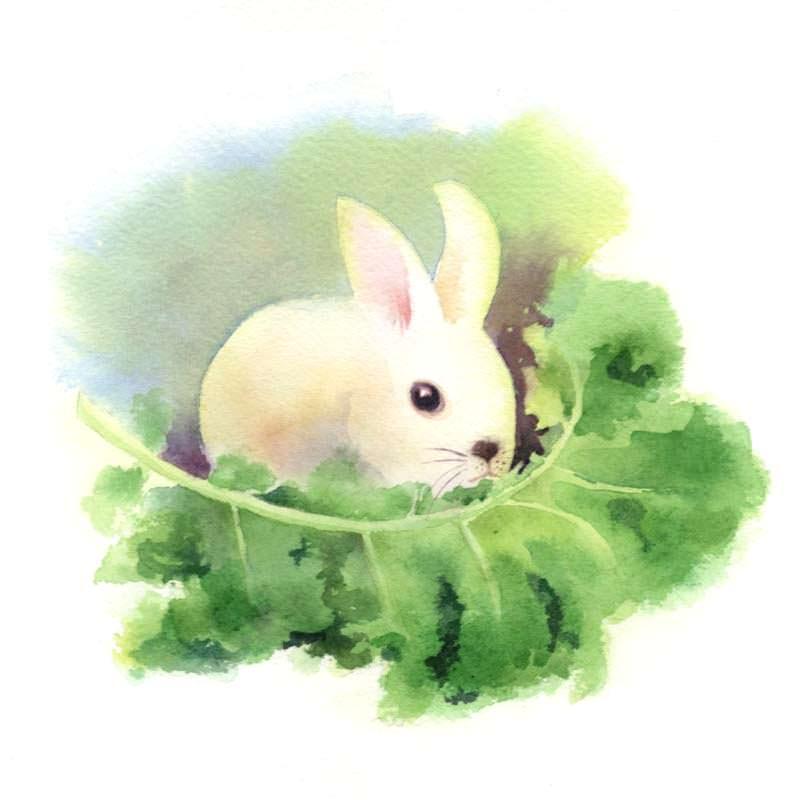 "Day 7/100 Kale #100daysOfRawFood. Bunny rabbit says "" Eat your Kale"" 07-kale-rabbit-800"