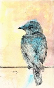 Bluebird: watercolor and graphite Bluebird