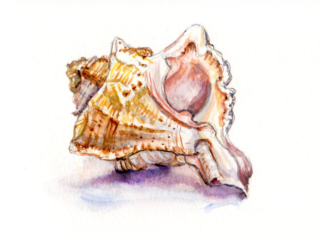 Day 2 - #WorldWatercolorGroup - Listening To Seashells - Conch Shell Watercolor - #doodlewash