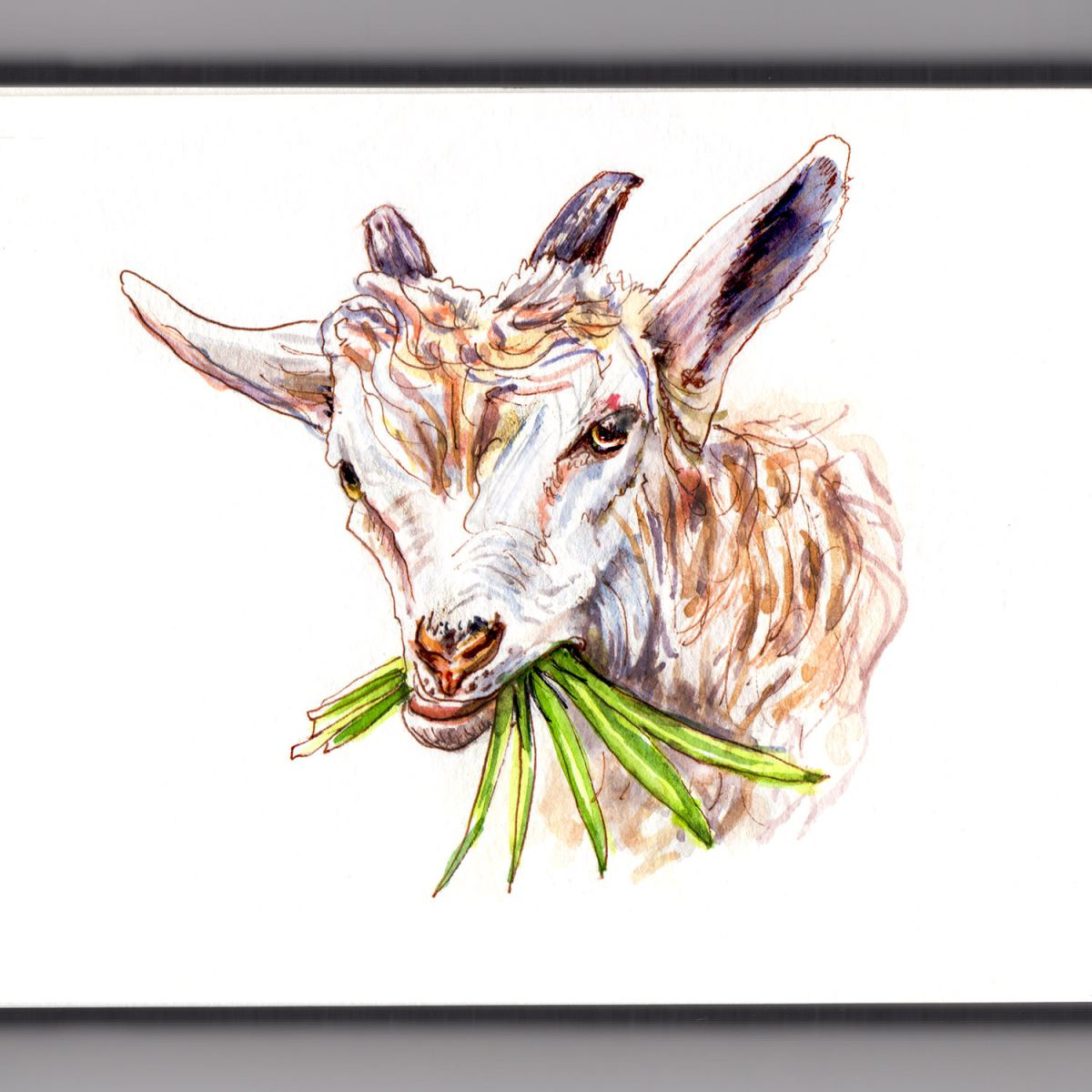 Day 21 - #WorldWatercolorGroup - Goat Eating Grass Watercolor - #doodlewash
