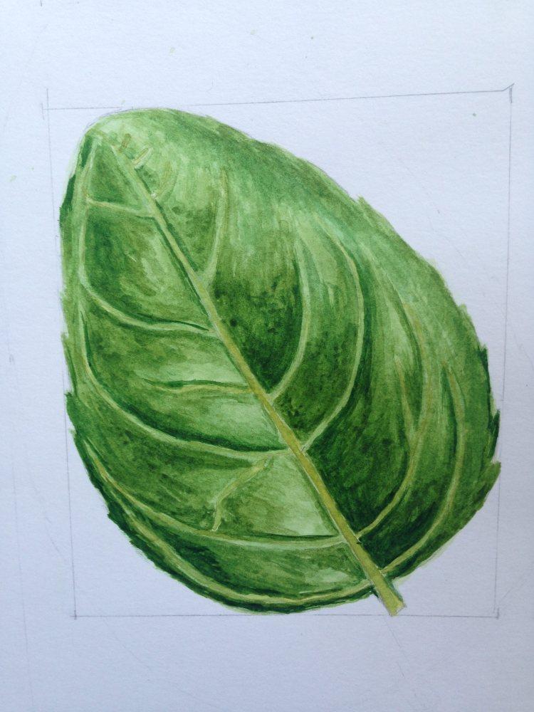Basil leaf from Anna Mason class IMG_2253