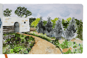 A sketch of a lovely spot at the Ladybird Johnson Wildflower Center in Austin, TX. Daniel Smith Wate