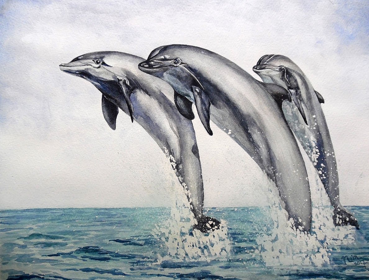 #WorldWatercolorGroup - Watercolor by Nimesha Udani - Joy - Dolphins - #doodlewash
