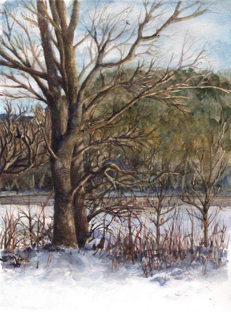 Winter Trees Landscape_WinterTrees_WC