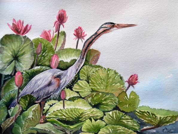 #WorldWatercolorGroup - Watercolor by Nimesha Udani - Purple Heron - #doodlewash