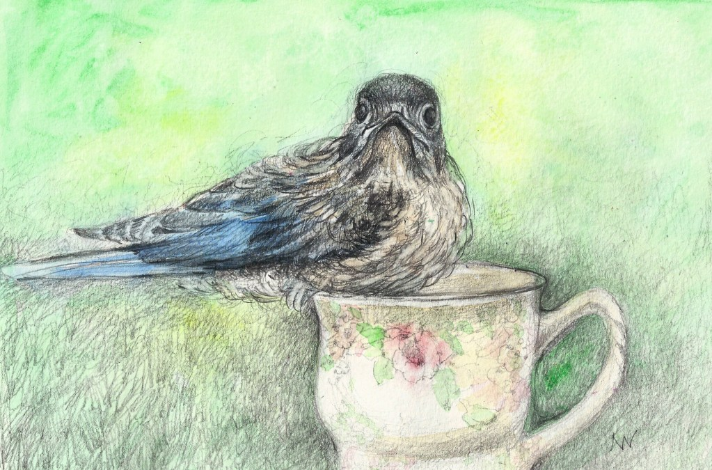Bluebird in teacup: watercolor and graphite SCAN0212