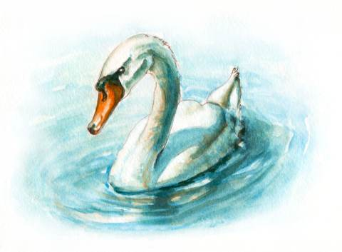 World Watercolor Month – Day 23 – A Swan In Two Colors