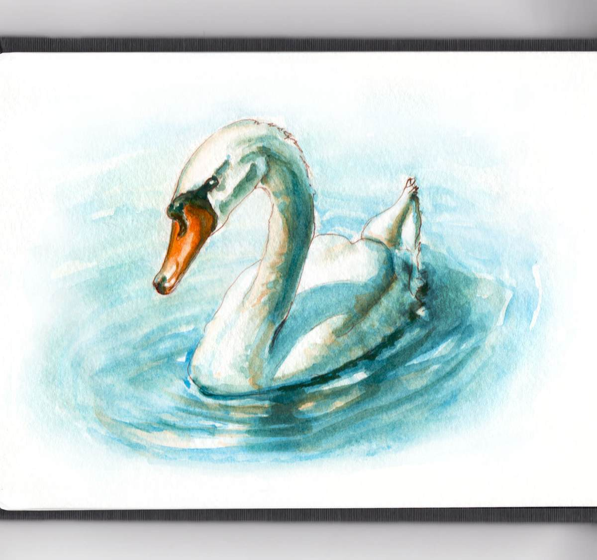 Day 23 - World Watercolor Month - Getting Wet Swan In The Water - Doodlewash