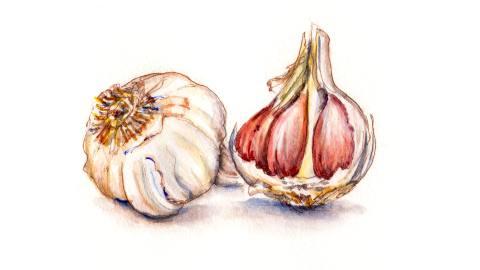 Day 24 - World Watercolor Month - Exploring Nature Garlic Cloves - Doodlewash