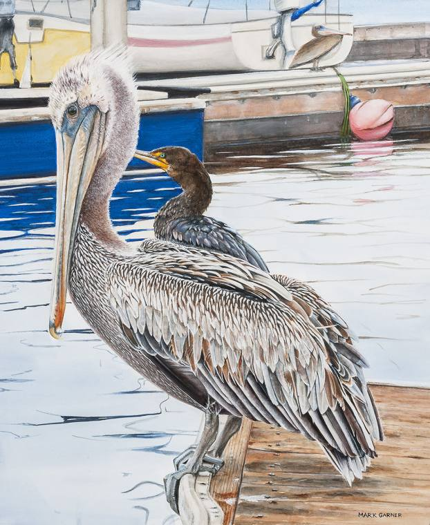 World Watercolor Month - Watercolor by Mark Garner - Monterey Pelican - Doodlewash