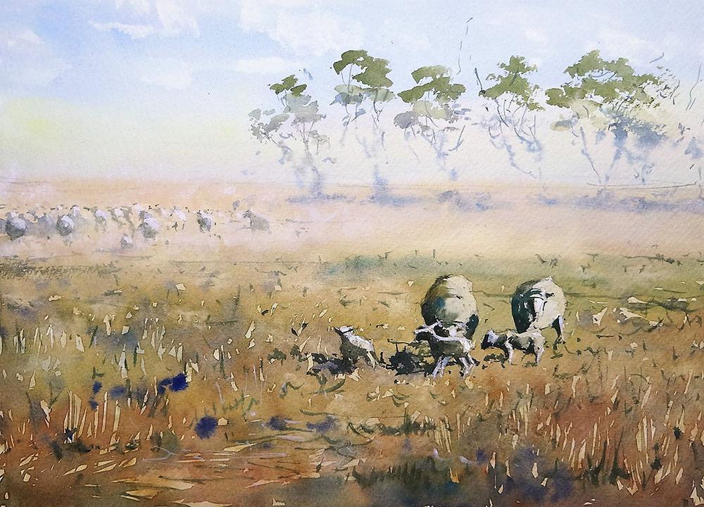 World Watercolor Month - Watercolor by Tim Wilmot - queensland sheep - Doodlewash