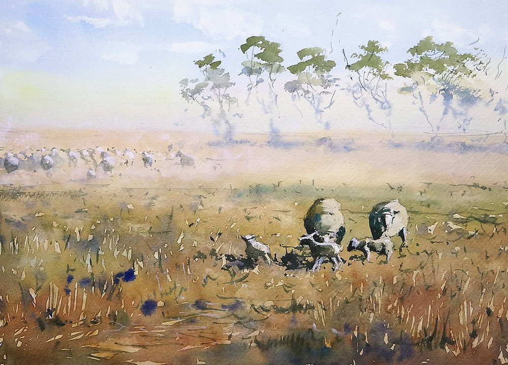 World Watercolor Month - Watercolor by Tim Wilmot - queensland sheep - Doodlewash