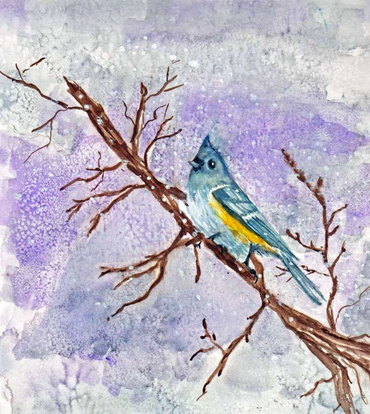 Watercolor of a tufted titmouse on a wintry day. Part of my backyard bird series. tuftedtitmouse001_