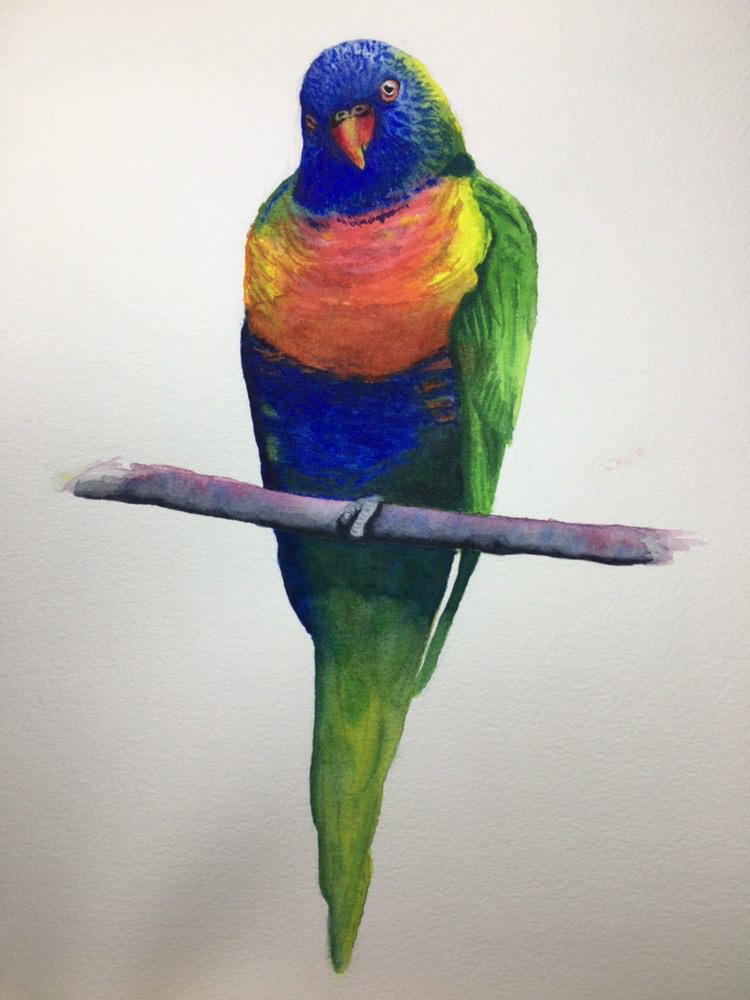 Rainbow parrot. Started to get muddy in places so maybe I was working on it after it started drying