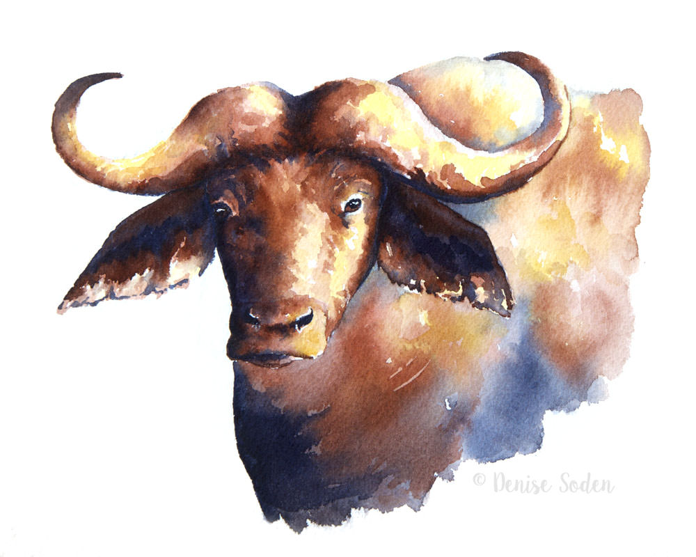 #WorldWatercolorGroup - Watercolor by Denise Soden - water buffalo - Doodlewash
