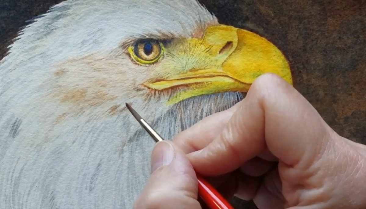 #WorldWatercolorGroup - Watercolor by Rebecca Rhodes - eagle WIP - Doodlewash