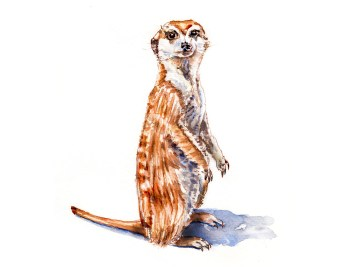 #WorldWatercolorGroup - Day 18 - My Favorite Wild Animal - Meerkat - Doodlewash