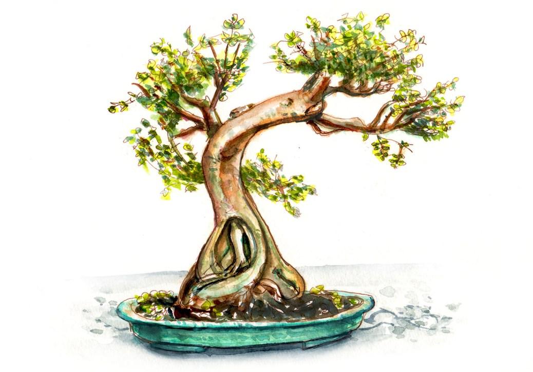 #WorldWatercolorGroup - Day 29 - My Favorite Tree - Bonsai - Doodlewash