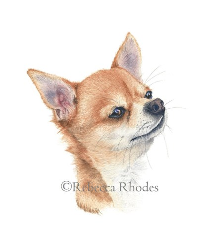 #WorldWatercolorGroup - Watercolor by Rebecca Rhodes - chihuahua - Doodlewash