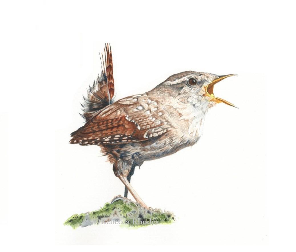 #WorldWatercolorGroup - Watercolor by Rebecca Rhodes - bird - wren - Doodlewash