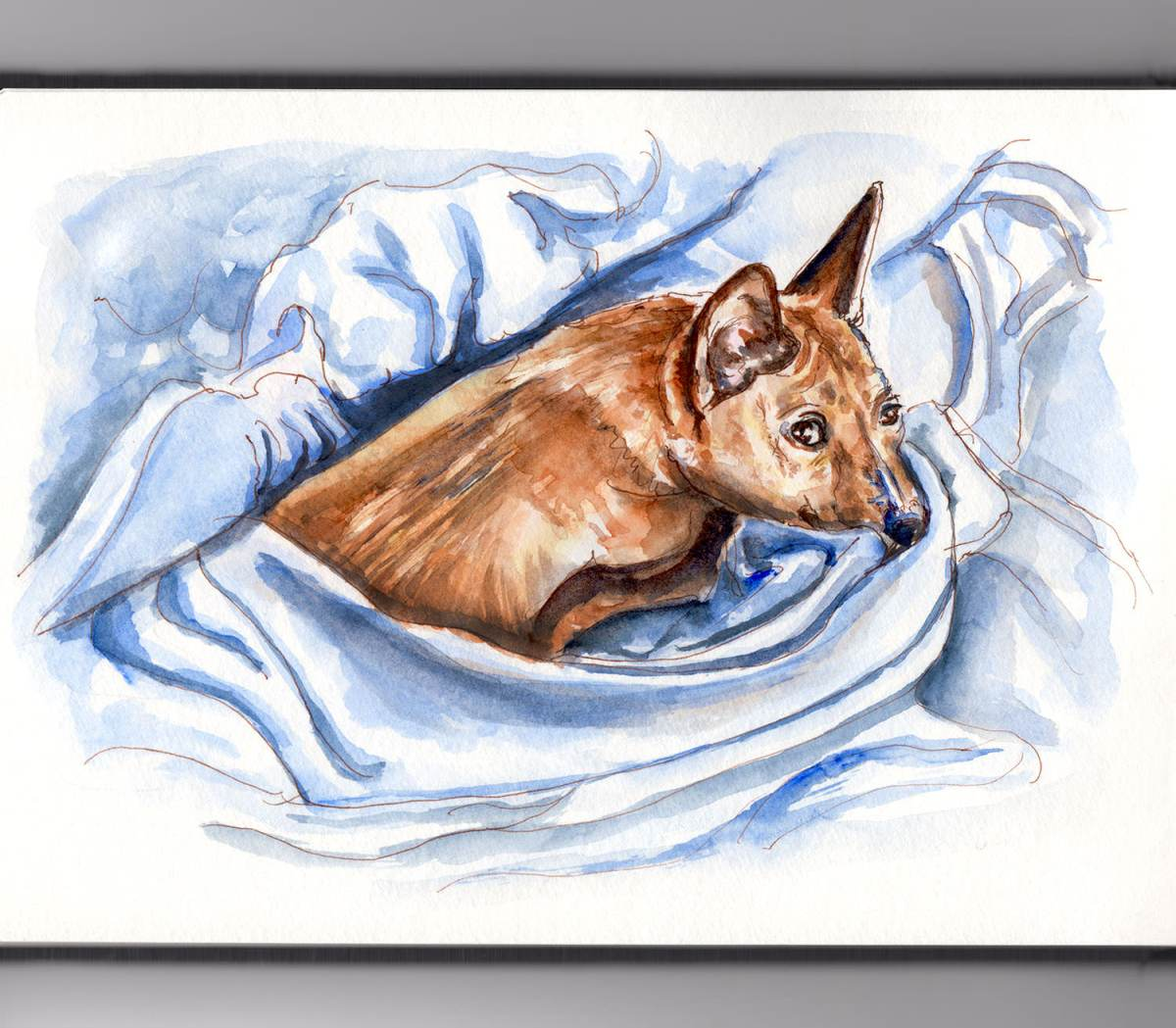#WorldWatercolorGroup - Day 1 - A Freshly Made Bed - Basenji - Doodlewash