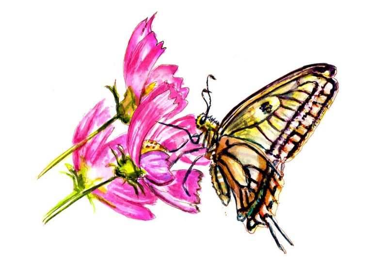Day 25 - Smelling Flowers - Butterfly Watercolour