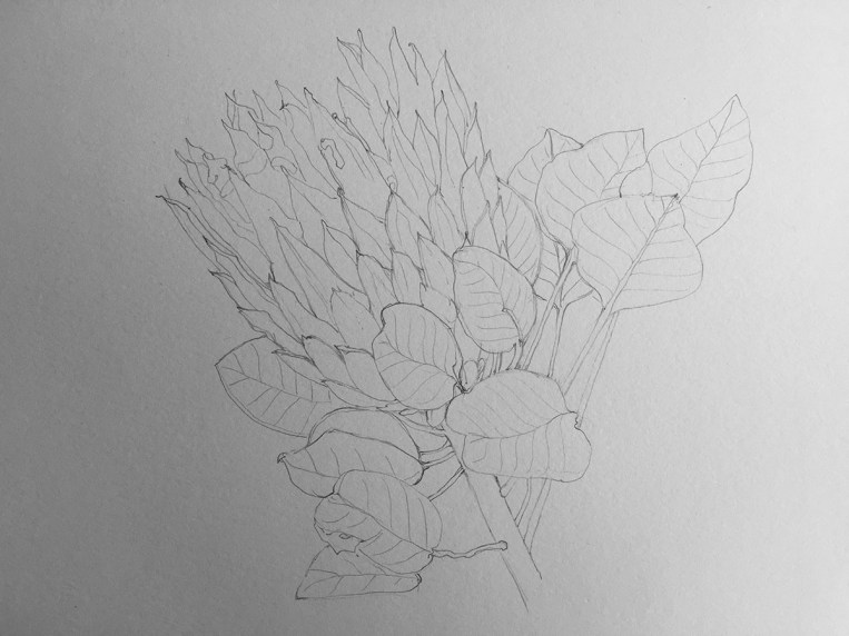 Figure 11. Light Initial Sketch of Protea Flower