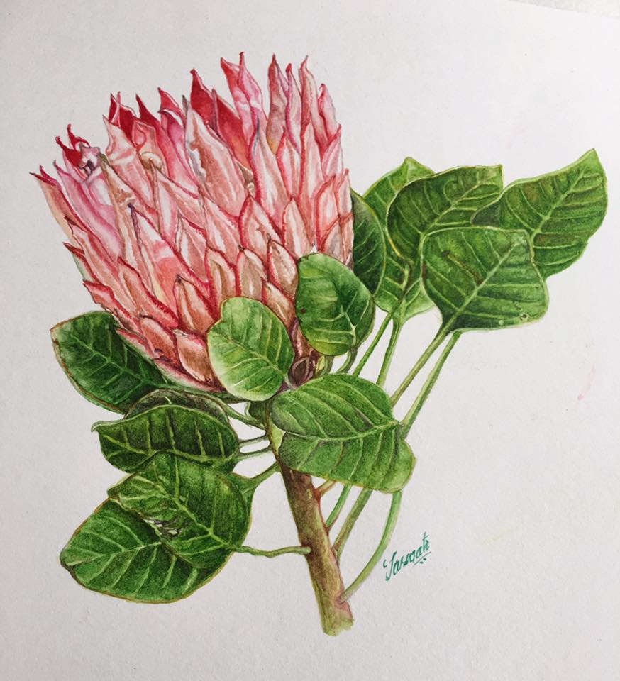 #WorldWatercolorGroup - Botanical Painting - Protea Watercolor Tutorial by Saswati Misra - Doodlewash