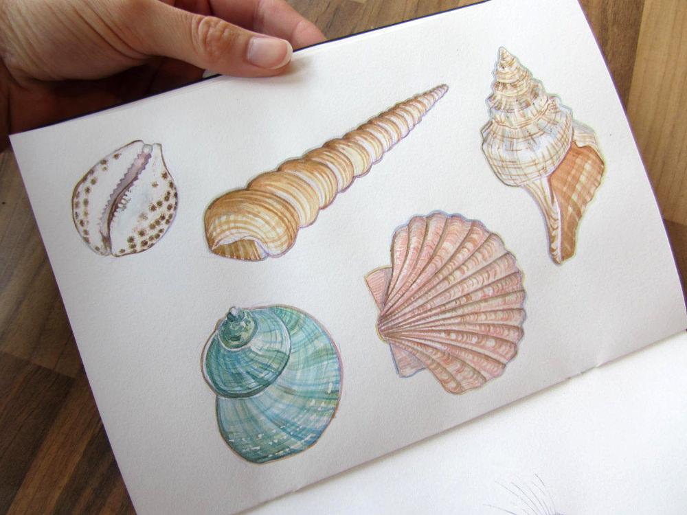 Pastel shells Shell3