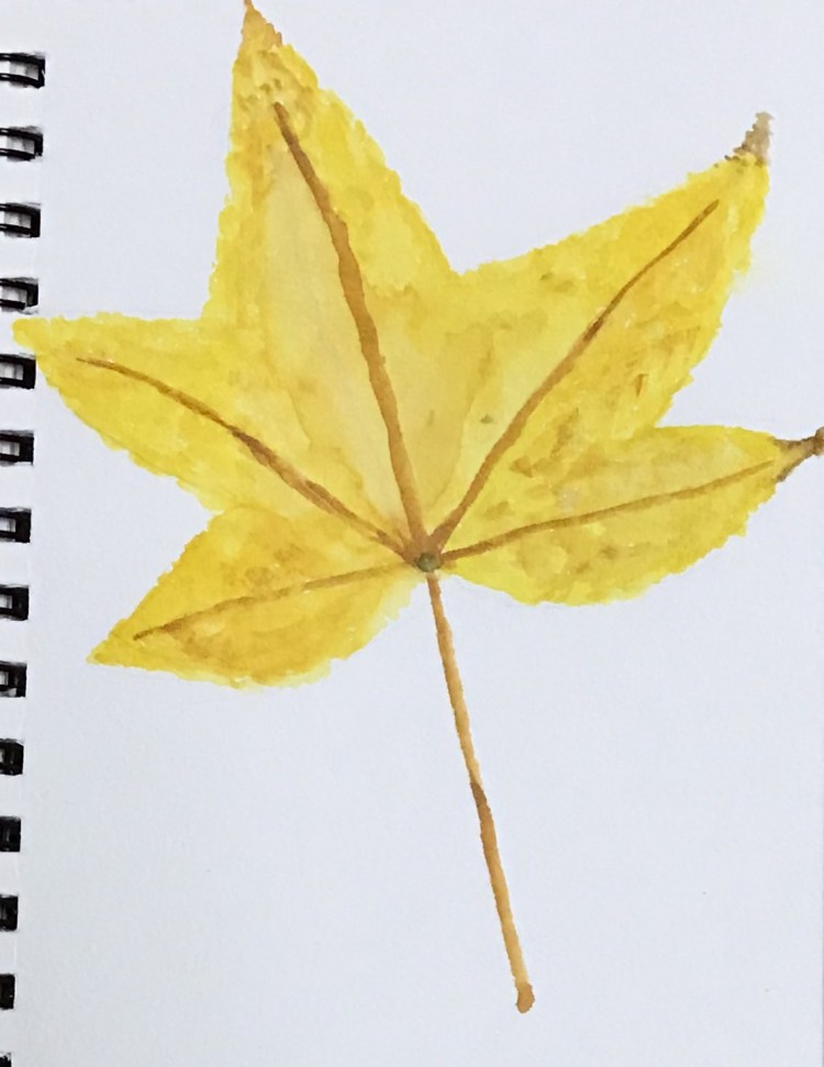 Yellow sweet gum leaf. Chugging along well. Not all have been fall theme but I have watercolored eve