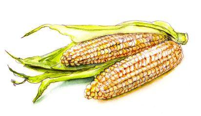 Day 21 - A Bit Of Corn