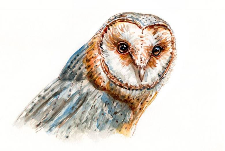 Day 22 - A Barn Owl