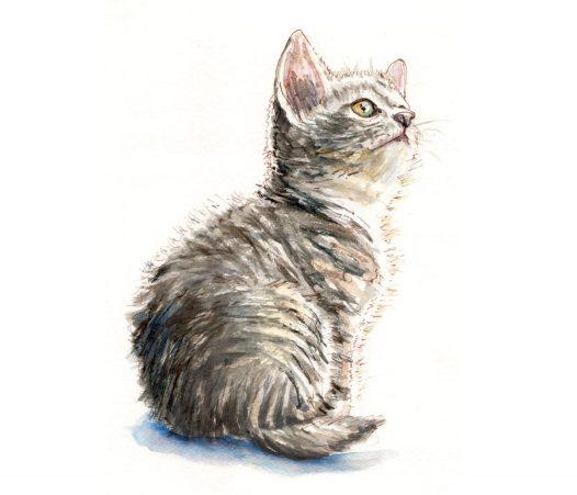 Day 23 - A Little Cat