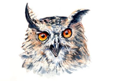 Day 8 - The Eyes Of An Owl