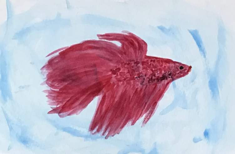 Hands too shaky for apple details. Shifted to something more flowing, a betta fish. I love them. EDF