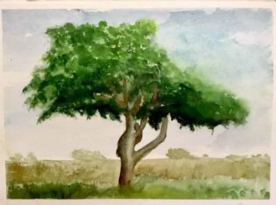 Trees painted for Instagram treesaroundtheglobe challege IMG_0384IMG_0388IMG_0389IMG_0395IMG_0408
