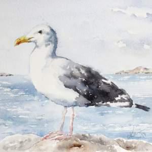 Seagull – Original Watercolor