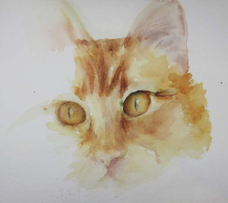 Trying to master orange eyes in the hope it will help me with a half finished owl painting! cat&#039
