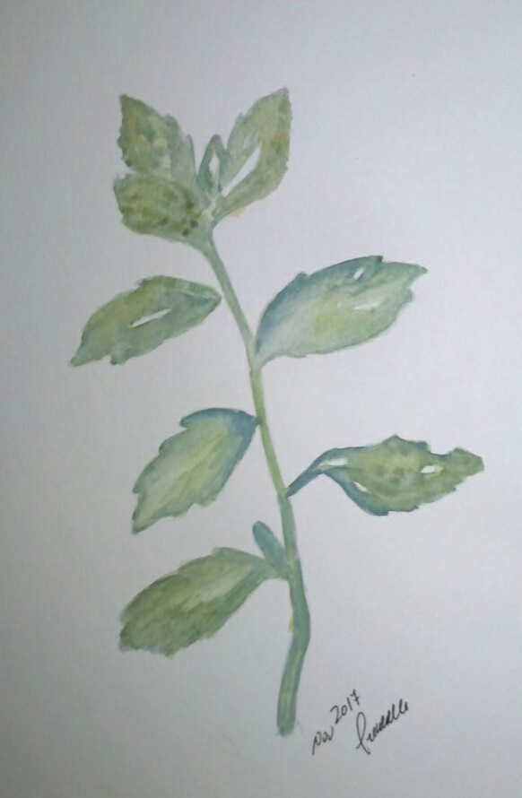 9. herbs: mint 9 herbs