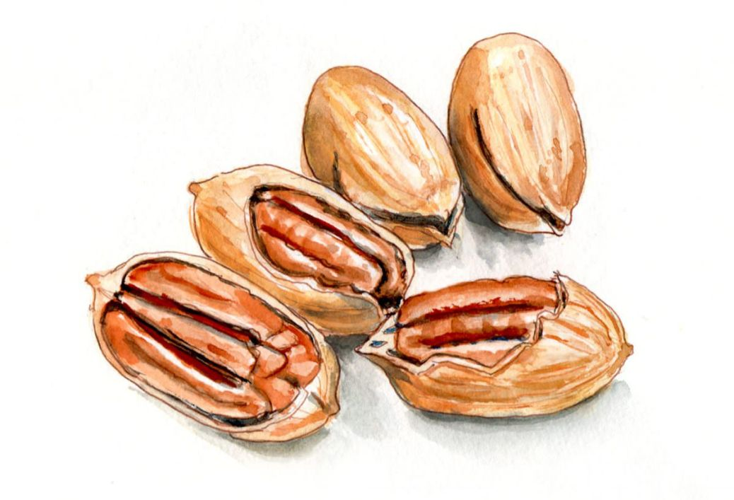 #WorldWatercolorGroup - Day 10 - A Handful Of Pecans - Doodlewash