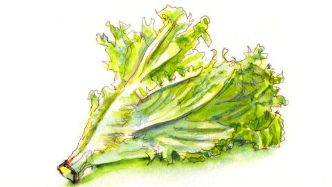 #WorldWatercolorGroup - Day 12 - A Bunch Of Lettuce - Doodlewash