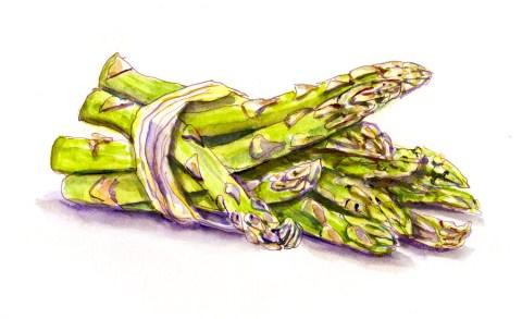 #WorldWatercolorGroup - A Bundle Of Asparagus - Doodlewash