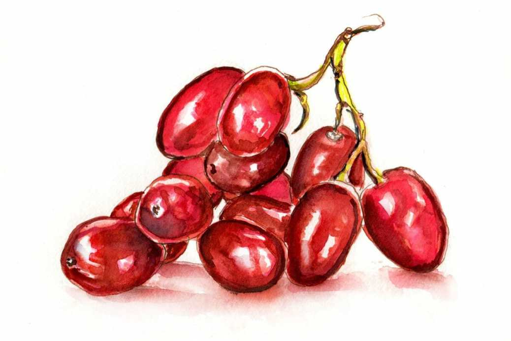 #WorldWatercolorGroup - Day 25 - Some Red Grapes - Doodlewash
