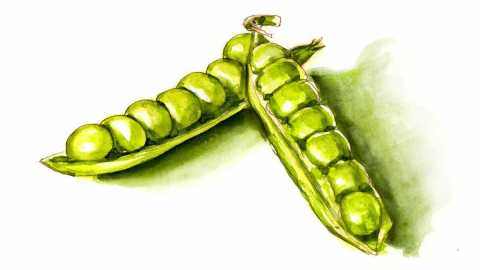 #WorldWatercolorGroup - Day 27 - Peas In A Pod - Doodlewash