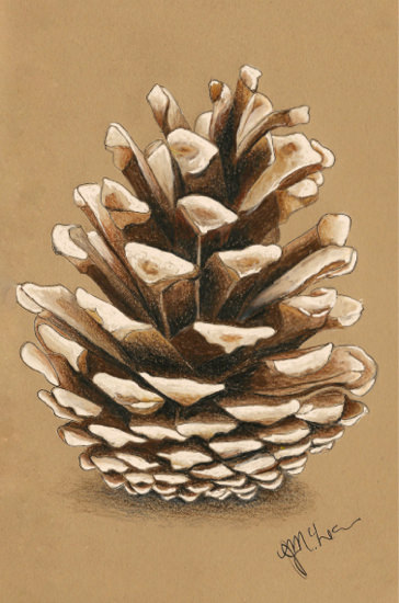 pinecone done on Beige Stillman & Birn Nova series sketchbook using Faber-Castell watercolor pen