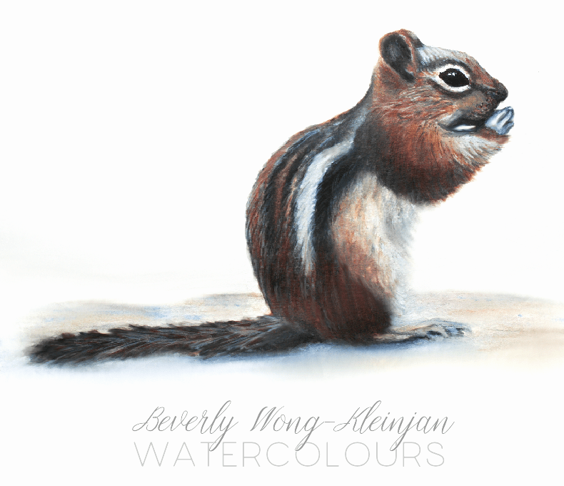 The most recent paintings from my sketchbooks… blackcapcardinalchipmunk_smteabooks