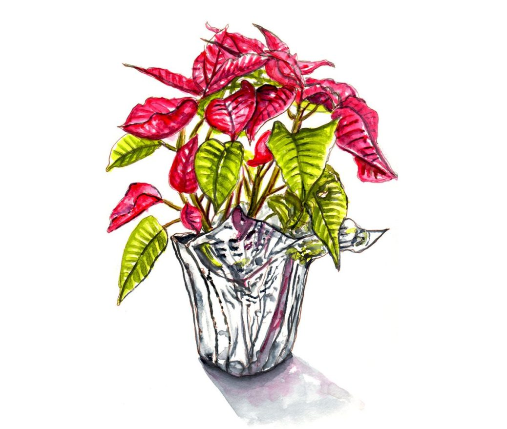 #WorldWatercolorGroup - Day 7 - Christmas In A Pot - Poinsettia - Doodlewash