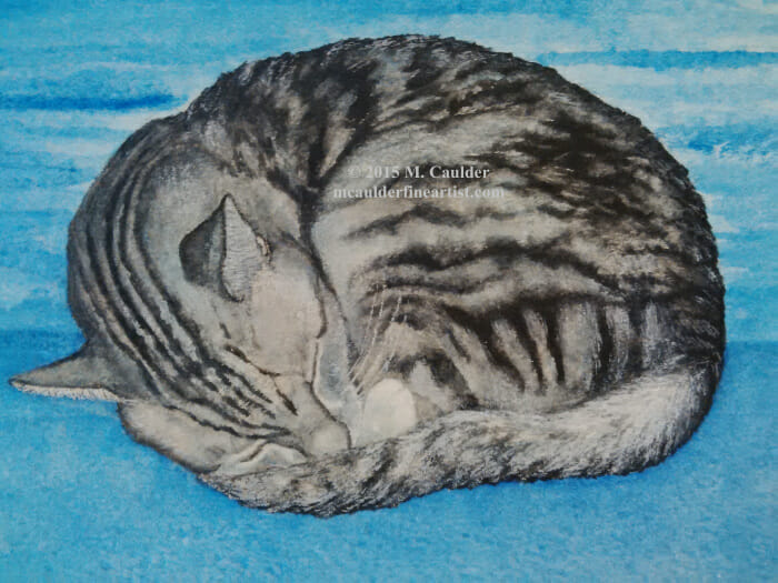 """""""Stripey"""" Our beautiful silver tabby. This breed stays about the size of a 6 month old t"""