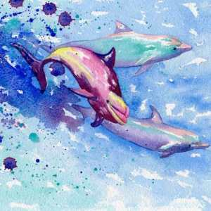 Swimming with dolphins, off the island of Rangiroa in the Tuamotus. A4, watercolour on Arches img357